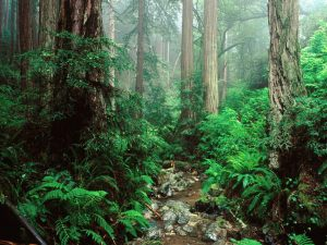 Webb Creek and Redwoods, Mount Tamalpais State Park, California