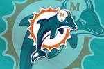 dolphinlarge