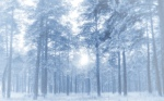 vladstudio_winterforest_1440x900