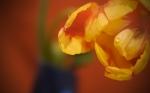 vladstudio_springflower_1440x900