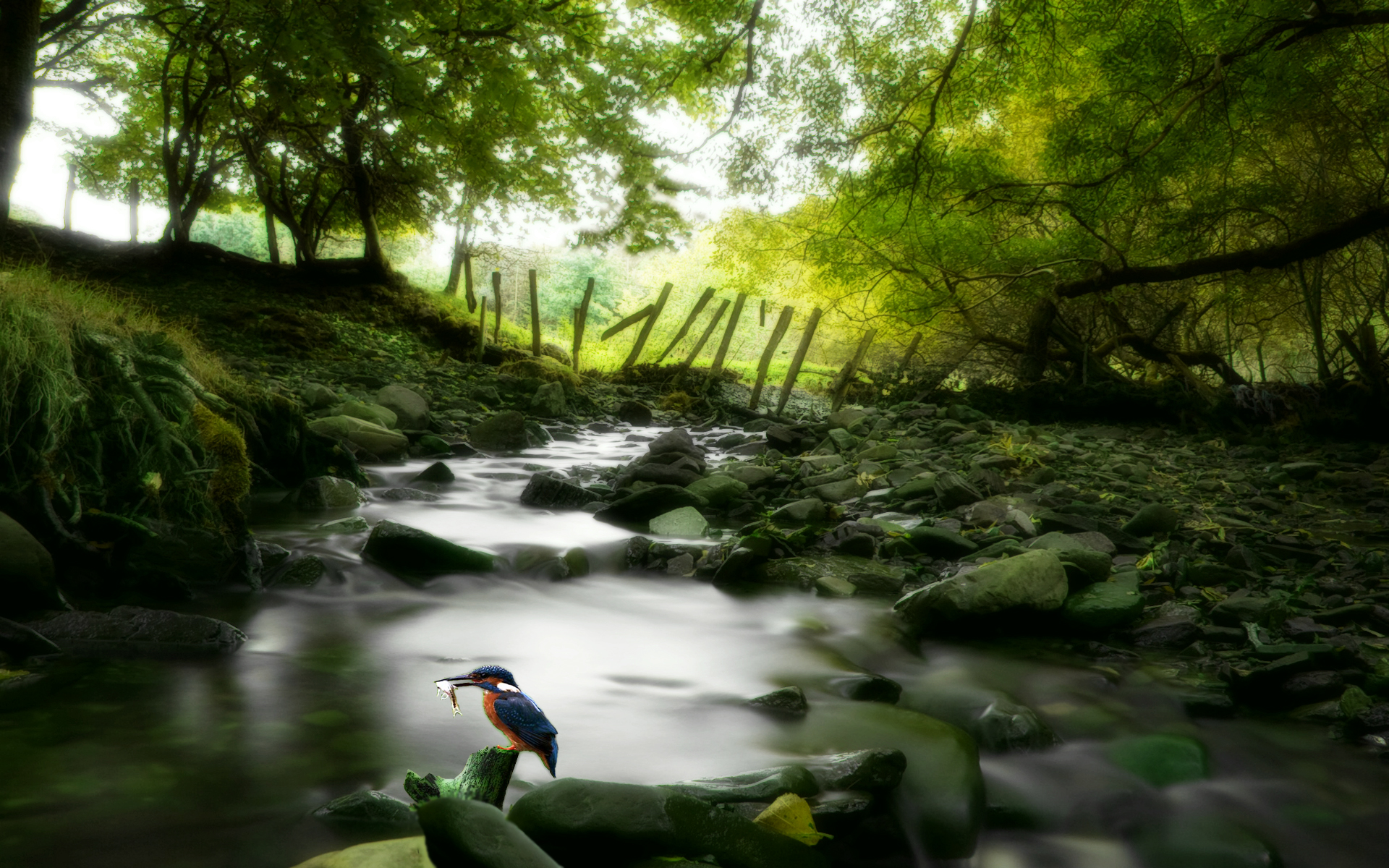 Awesome Nature Wallpapers Tale of the King Fisher