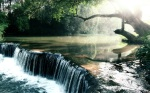 Rainforest_Creek_Wallpaper_by_nxxos