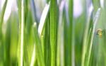 v_grass1920x1200