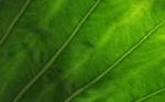 Nature_Veins