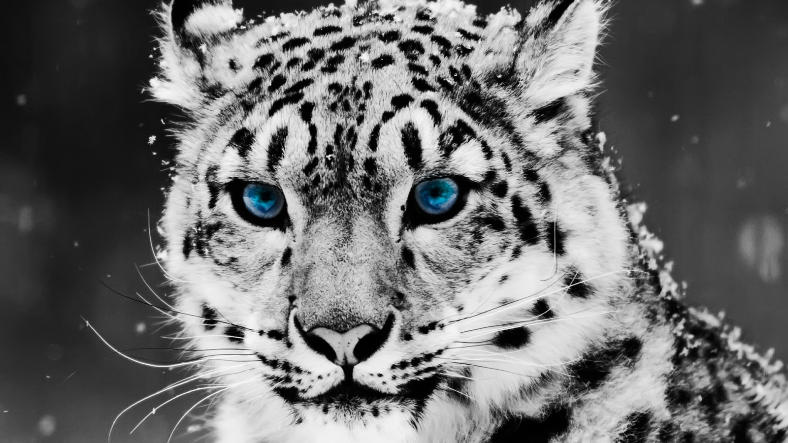 Animals Wallpaper Set 1 « Awesome Wallpapers