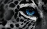 Animals (3)