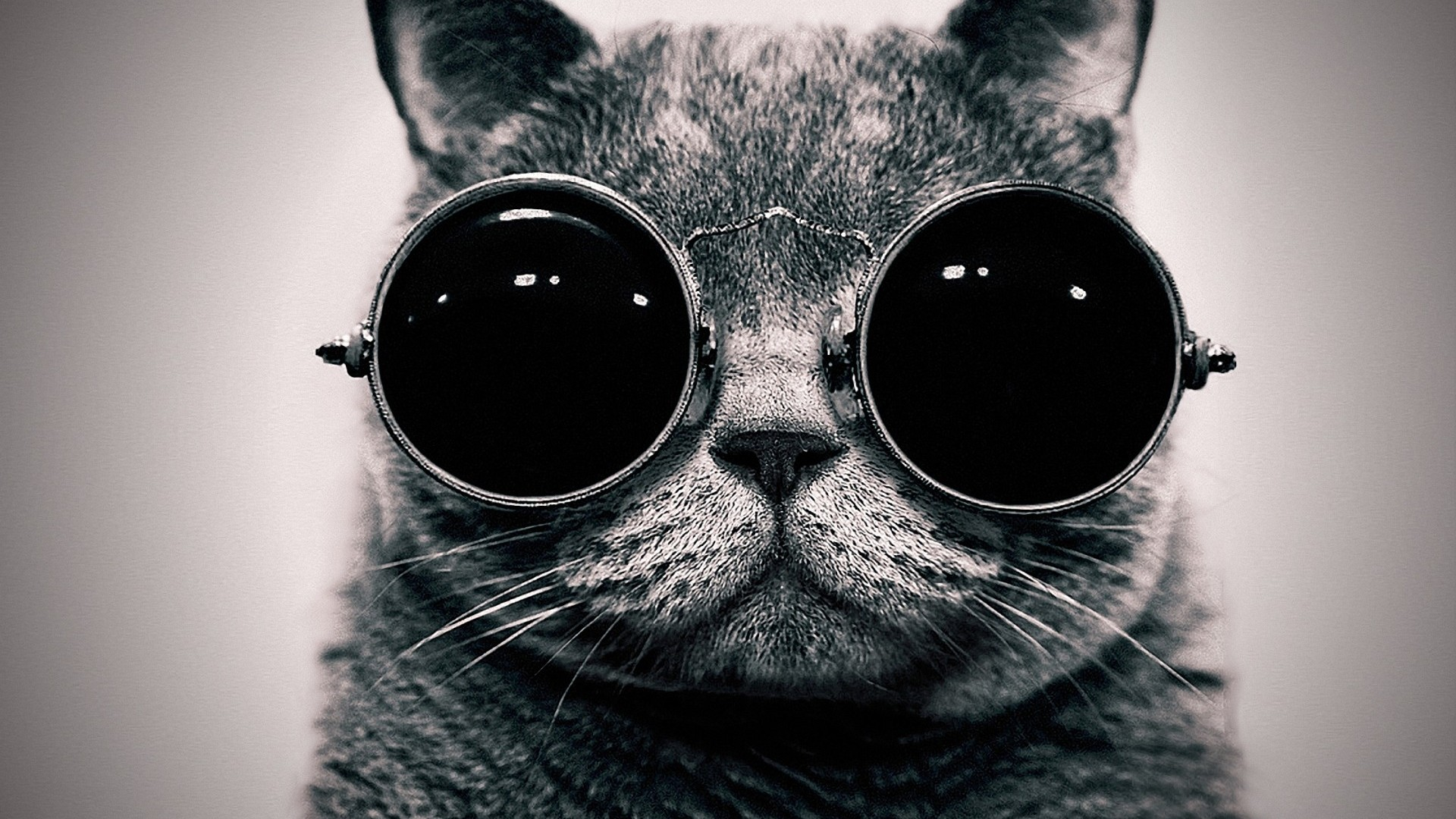 Animals awesome wallpapers page 3 - Cool backgrounds of cats ...