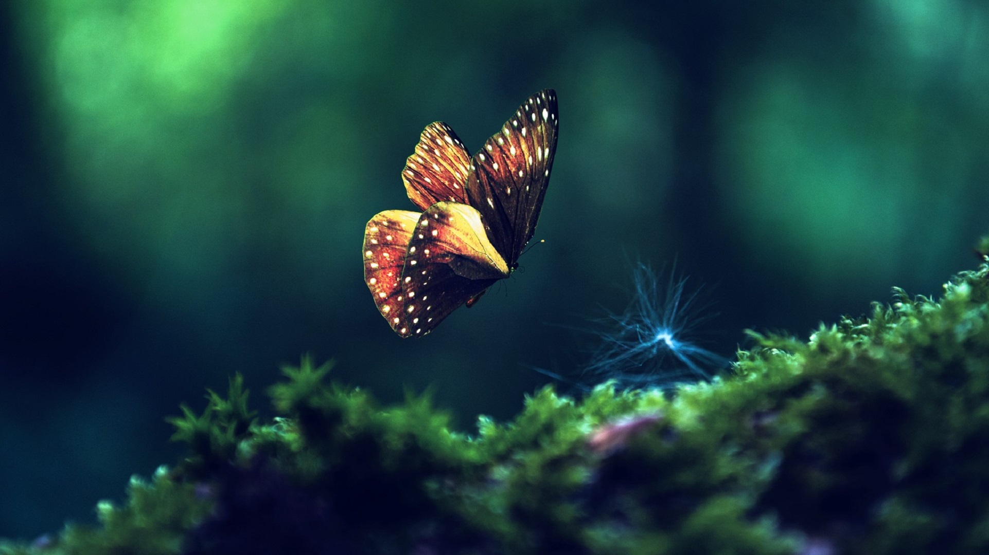 butterfly awesome wallpapers