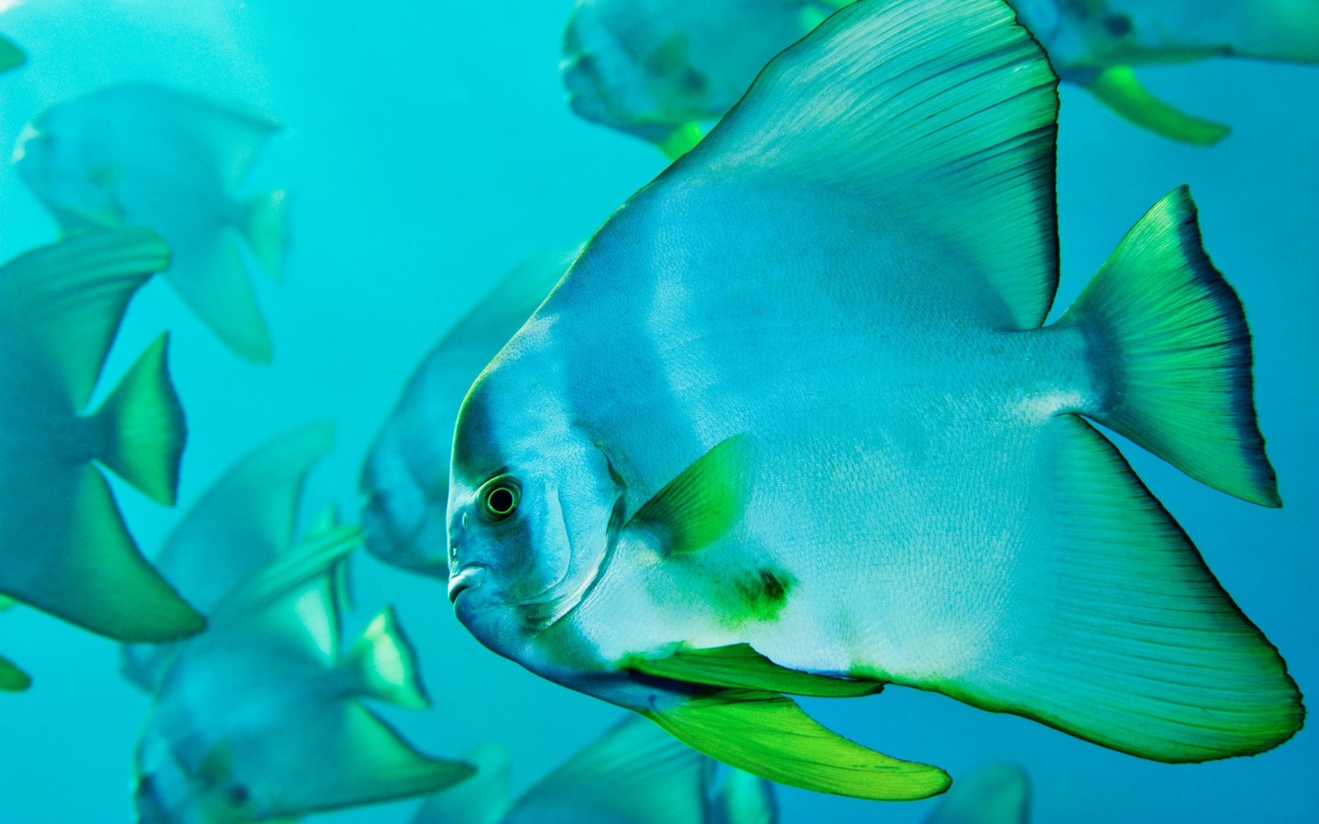fish Awesome Wallpapers