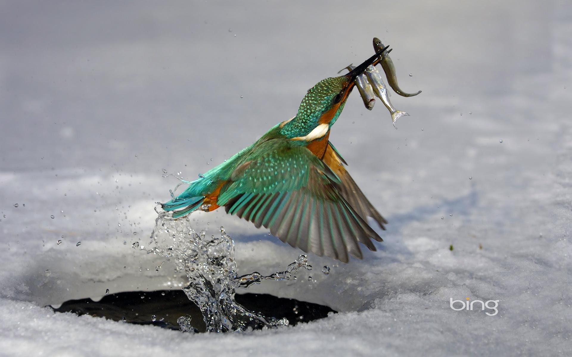 water birds bing wallpaper - photo #1