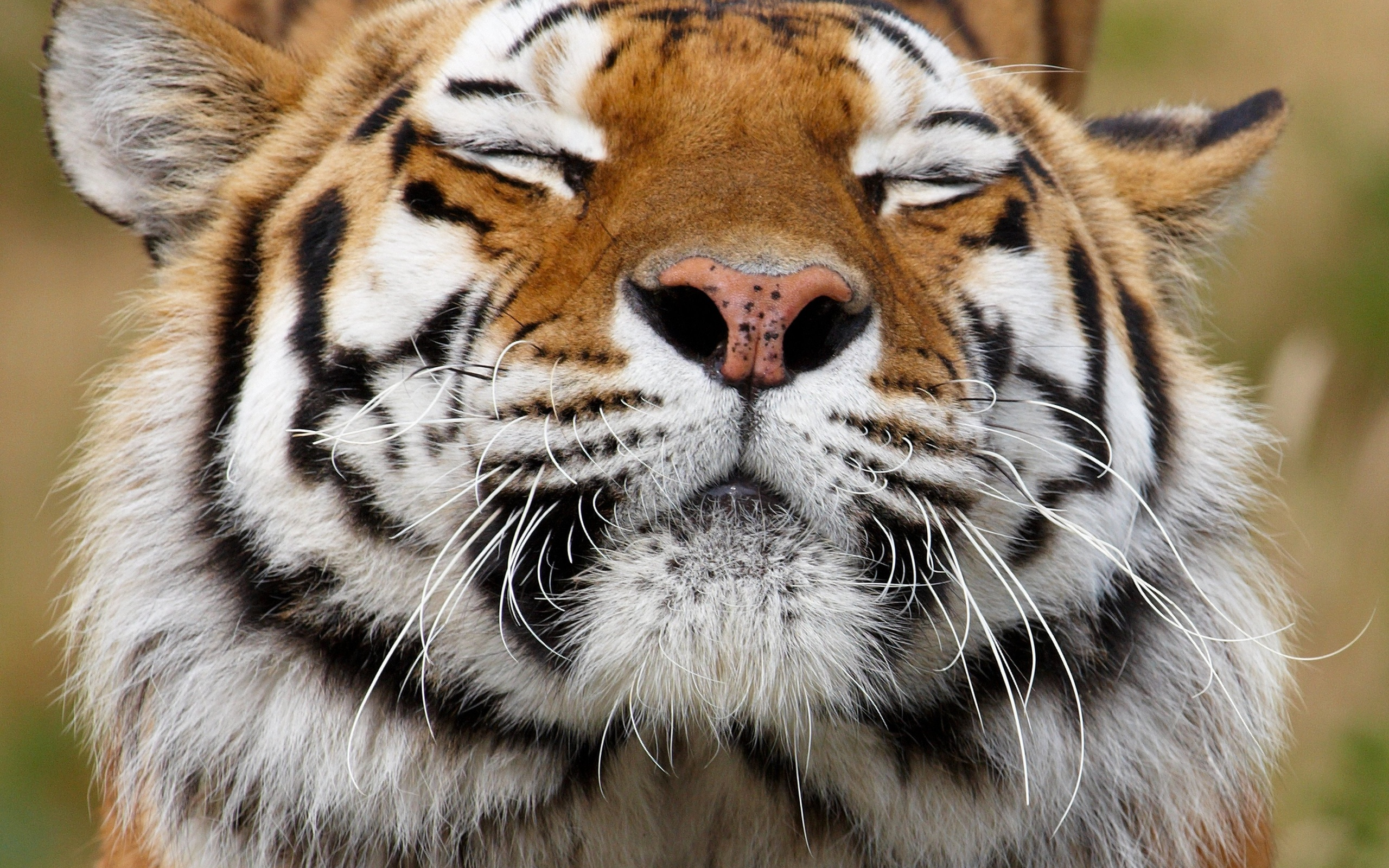 Animals Wallpaper Set 5 171 Awesome Wallpapers