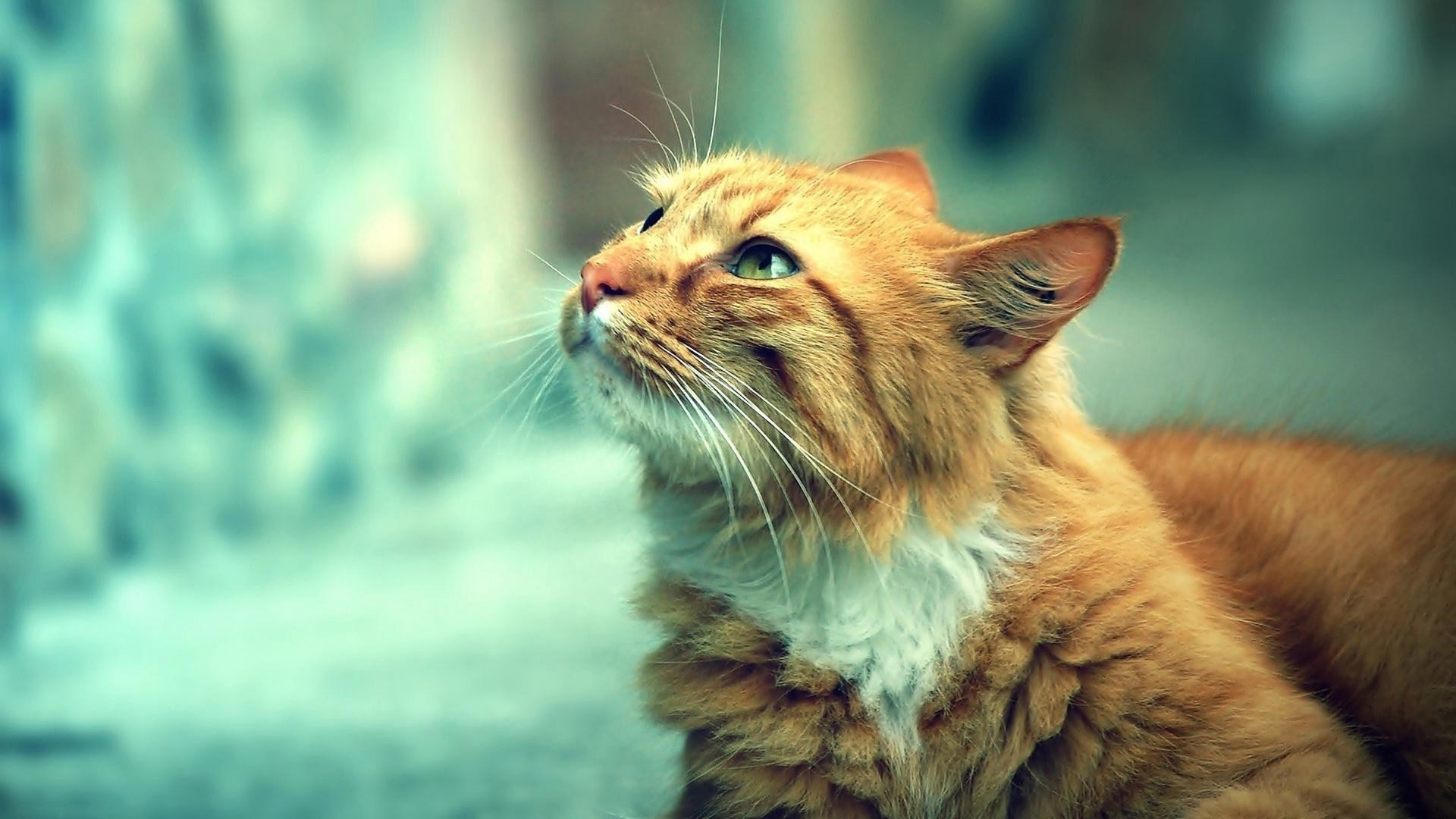 Animals Wallpaper Set 6 « Awesome Wallpapers