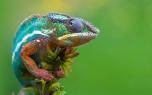 Chameleon - 2880x1800