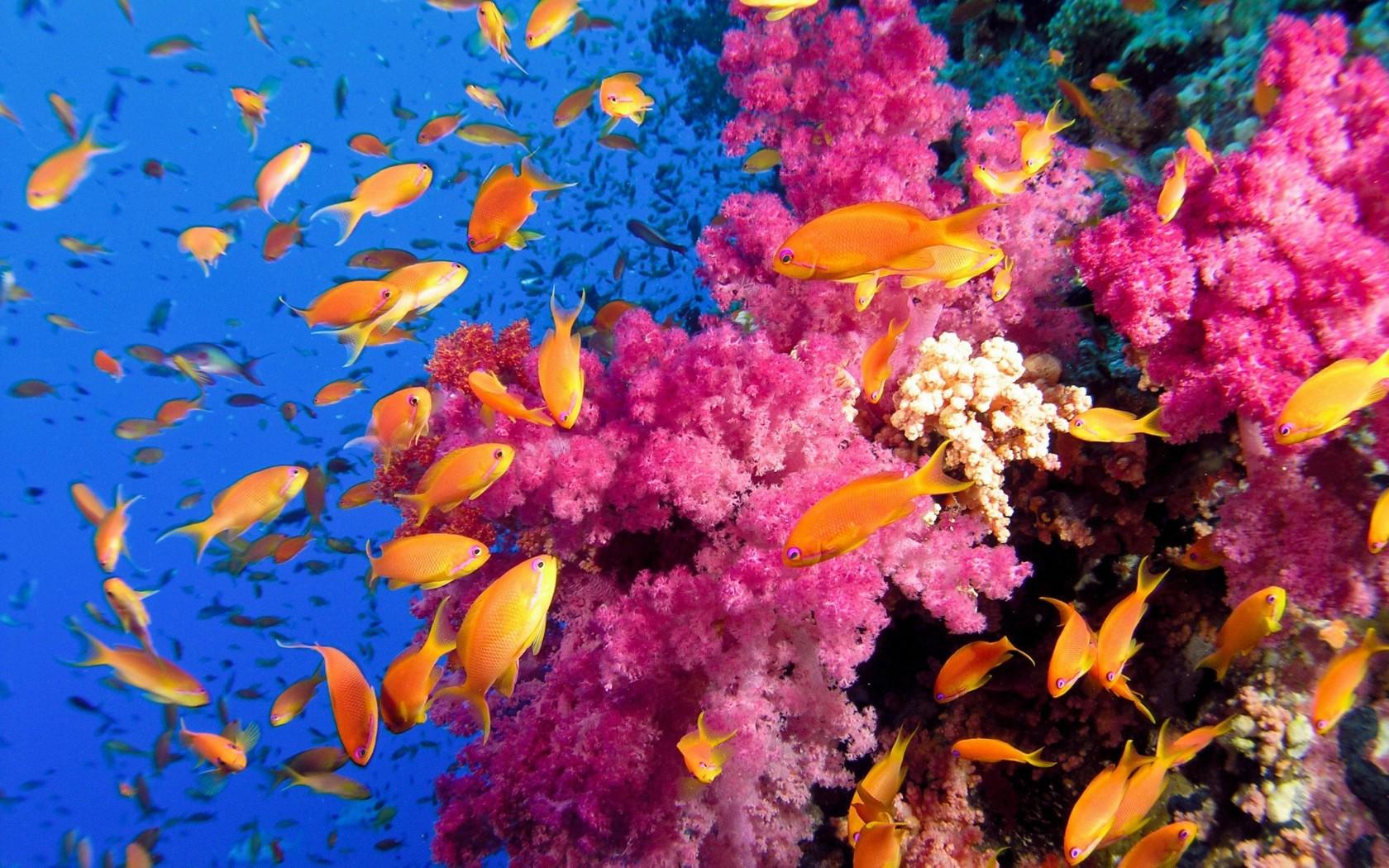 HD Saltwater Fish Wallpaper