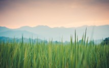 Thegreenergrass - 2880x1800 (Large)