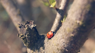 where-are-u-going-lady-bug127527