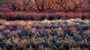 2014-01-10_EN-AU10309991569_Foliage-including-cottonwoods-willows-sage-and-rabbitbrush-in-Californias-Owens-Valley_1920x1080