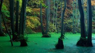 2014-01-13_DE-DE9536885168_Buchen-und-Erlen-im-Nationalpark-Jasmund-Insel-RC3BCgen-Mecklenburg-Vorpommern-Deutschland_1920x1080