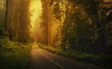 Driving this Road Down to Paradise