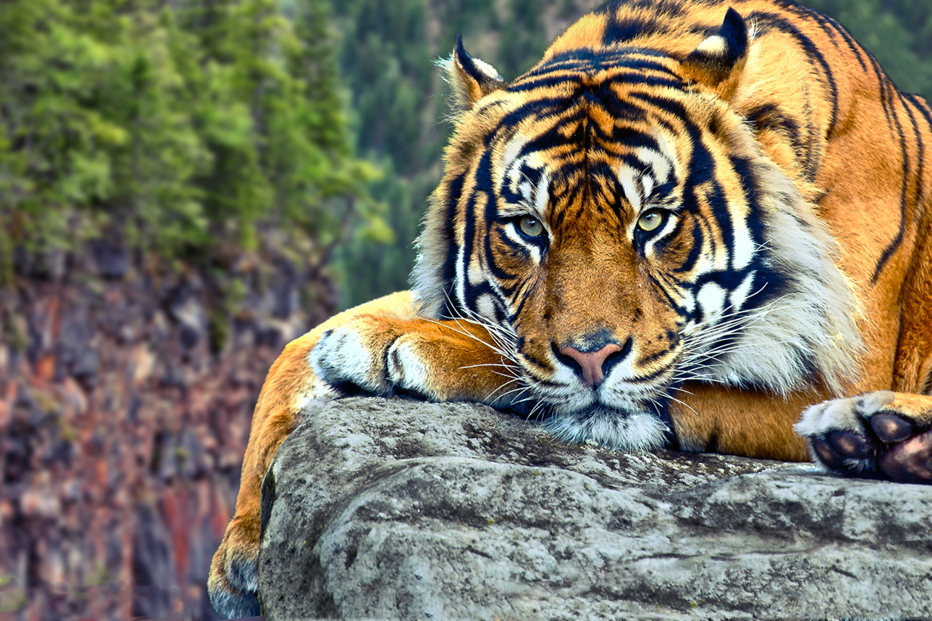 animals wallpaper set 25 « awesome wallpapers
