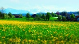 rustic_spring_by_layperson-d7exao3